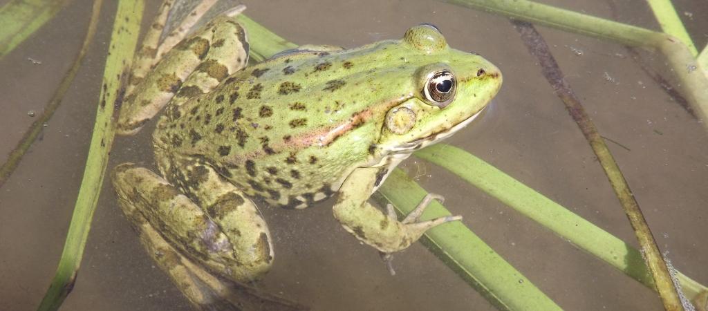 Ecologie și protecția mediului